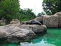 Leones marinos en el Zoo de Bronx - panoramio.jpg