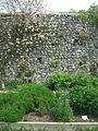 Lewes Priory herb garden.jpg