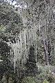 Lichen (Paro Taktsang).jpg