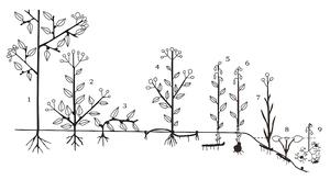 Raunkiær plant life-form - Life forms