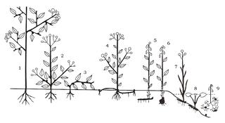 Raunkiær plant life-form Types of plant form as defined by Christen Raunkiær