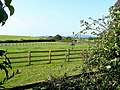 Limbury pasture - geograph.org.uk - 1501607.jpg