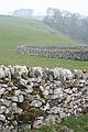 Limestone Wall - geograph.org.uk - 772994.jpg