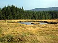 Lochan on the edge of Carrick Forest - geograph.org.uk - 263525.jpg