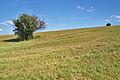 Louky na kopci zápdně od Strání, okres Uherské Hradiště (02).jpg