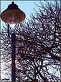 Luce...contro sole - panoramio.jpg