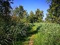 Lundener niederung 2019 Naturschutzgebiet S-H Weg durchs Schilf.jpg