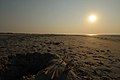 M^m Walking in the beach in Holland - Creative Commons by gnuckx - panoramio (1).jpg