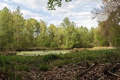 Münster, Wolbeck, Wolbecker Tiergarten, Naturwaldzelle -Teppes Viertel- -- 2014 -- 7086.jpg