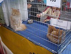 Deux Norvégiens dans une cage lors d'une exposition
