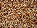 Maïs de couleur rouge cultivé au Bénin.jpg