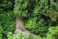 MacRitchie Nature Trail, Singapore; December 2014 (10).jpg