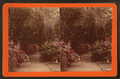 Magnolia gardens, by J. A. Palmer.png