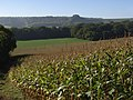 Maize, Inkpen - geograph.org.uk - 243495.jpg