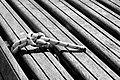 Maritimer Knoten - Knots.jpg