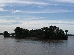Exemple illustrant la capacité des arbres à contribuer à la résilience écologique; L'épave métallique de l'Edith Cavel coulé en 1825 près de l'estuaire du Maroni, entre France et Surinam s'est rapidement couvert d'arbres d'essences pionnières bien qu'exposée en été à une température diurne très élevée.