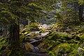 MarusyaSlobozhan forest.jpg