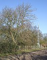 Mast and Tree - geograph.org.uk - 367451.jpg