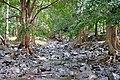 Mauritius 23.08.2009 07-39-18.jpg