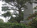 McClaren Park, San Francisco (8350921353).jpg