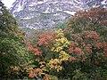 McKittrick Canyon Foliage 2008.jpg