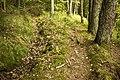 Mežs pie Ātrajām klintīm - panoramio.jpg