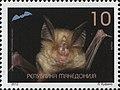 Mediterranean Horseshoe Bat (Rhinolophus euryale).jpg