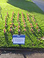 Memorial to UK military deaths in Afghanistan, St John's Gardens, Liverpool.JPG