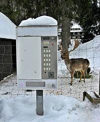 Menzenschwand Hirschfutterautomat.jpg