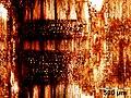Mikroskopische Ansicht der Diospyros celebica im Radialschnitt.jpg