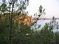 Miris borove šume i mora - panoramio.jpg