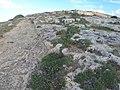 Mistra, St Paul's Bay, Malta - panoramio (21).jpg