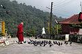 Monk feeding pigeons, Rumtek (8064711529).jpg