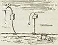 Montpetit - Poissons d'eau douce du Canada, 1897 (page 394 crop).jpg