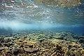 Moore Reef underwater ReefScape.jpg