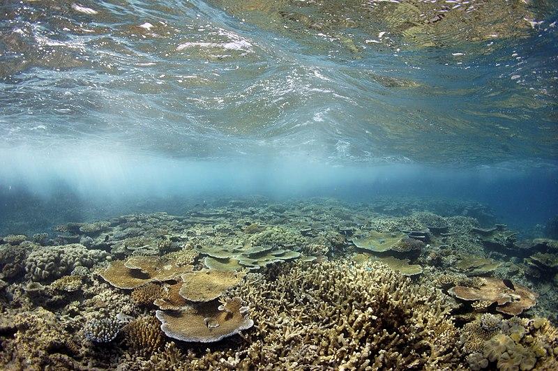 ファイル:ムーアリーフ水中ReefScape.jpg