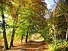 Autumnal beech trees lining a woodland path