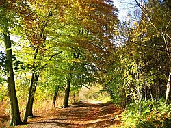Deciduous woodland at Delamere Forest in autumn