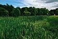 Moscow, swamp in Lefortovsky Park (21237756202).jpg
