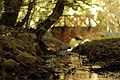Mostek w parku Fazaniec.jpg