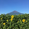Mt Fuji and Sunflowers on August 5th 2017.jpg
