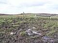 Mucky field at Shantavny Scotch - geograph.org.uk - 144153.jpg
