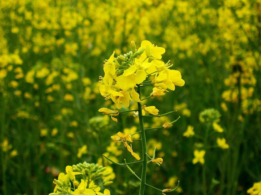 Benefits Of Yellow Tint Glasses