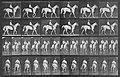 Muybridge, Eadweard - Elberon mit Reiter (1.26 Sekunden) (Zeno Fotografie).jpg