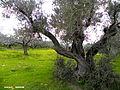 Nablus 11.jpg
