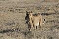 Namibia-1118.jpg