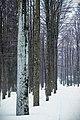 Nationalpark Bayerischer Wald 7.jpg