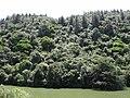 Native bush along lower lake in Karori Wildlife Sanctuary.jpg