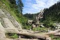 Natural Beauty of Notrhren Pakistan.JPG
