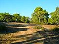 Naturbelassener Pinien-Kiefern Wald 2 östlich von Side - Sorgun - Titreyengöl - panoramio.jpg